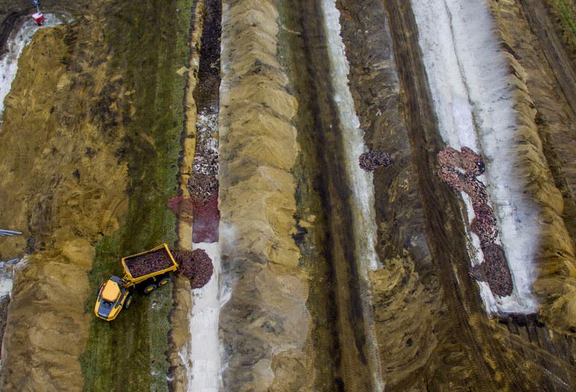 Zdjęcie z lotu ptaka pokazujące poligon, na terenie którego zostało pochowanych tysiące norek /MORTEN STRICKER / RITZAU SCANPIX / AFP /AFP