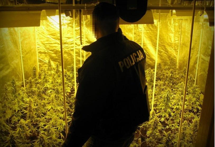 Zdjęcie z ujawnionej plantacji /Policja