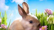 Zdradzamy tajemnicę Króliczka Wielkanocnego