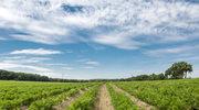 Zdrowa gleba jako fundament rolnictwa ekologicznego