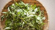 Zdrowie i uroda zaklęte w ziołach