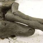 Ze szczątek źrebaka sprzed 42 000 lat pobrano płynną krew