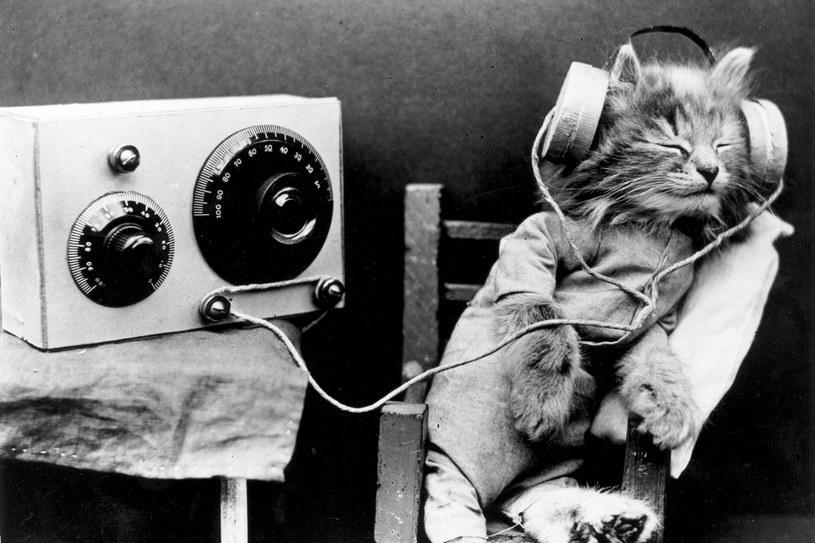Ze względu na wrodzony wdzięk i urodę kariera w modelingu jest przeznaczeniem wielu kotów, 1926 rok /Getty Images/Flash Press Media