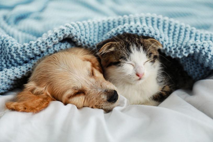 Żeby spać z pupilami, muszą być one zdrowe! /123RF/PICSEL