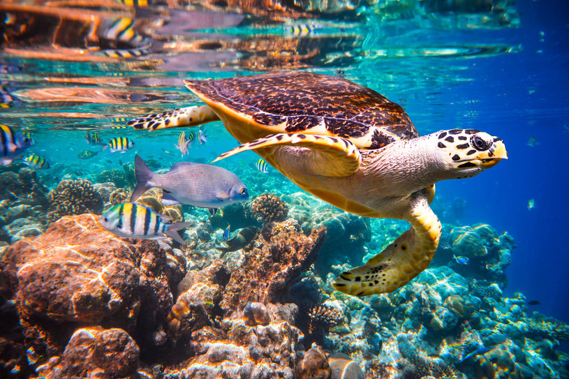 Zespół badaczy udowodnił, że hałas ma niszczycielski wpływ na morski ekosystem /123RF/PICSEL