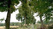 Zetną drzewa ku czci Leszka Białego