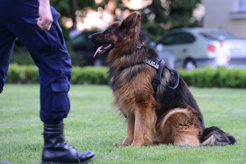 Zginęło sześć psów policyjnych /Adam Staszkiewicz /East News