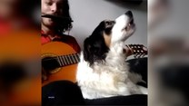 Zgrany muzyczny duet. Mężczyzna gra na gitarze i harmonijce, a pies?