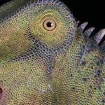 Zidentyfikowano nową rodzinę dinozaurów