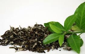 Zielona herbata dawkowanie /© Photogenica