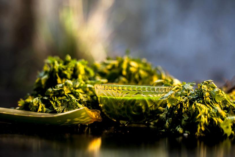 Zielona pietruszka to wartościowy składnik toniku i maseczki /123RF/PICSEL