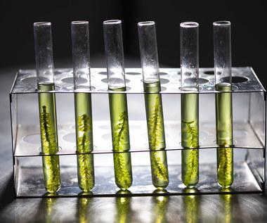 Zielone rafinerie w mateczniku przemysłu naftowego