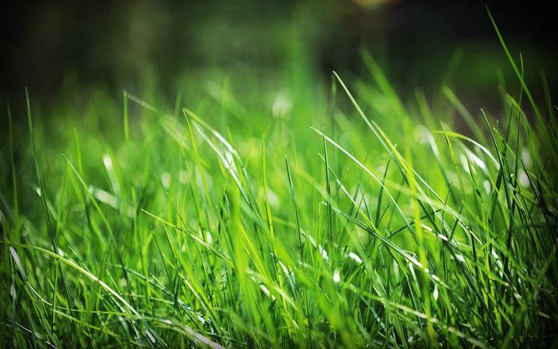 Zielony trawnik /© Photogenica