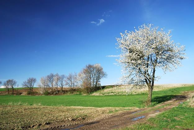 Ziemi rolnej już tak łatwo nie kupisz... ani nie sprzedasz /© Panthermedia