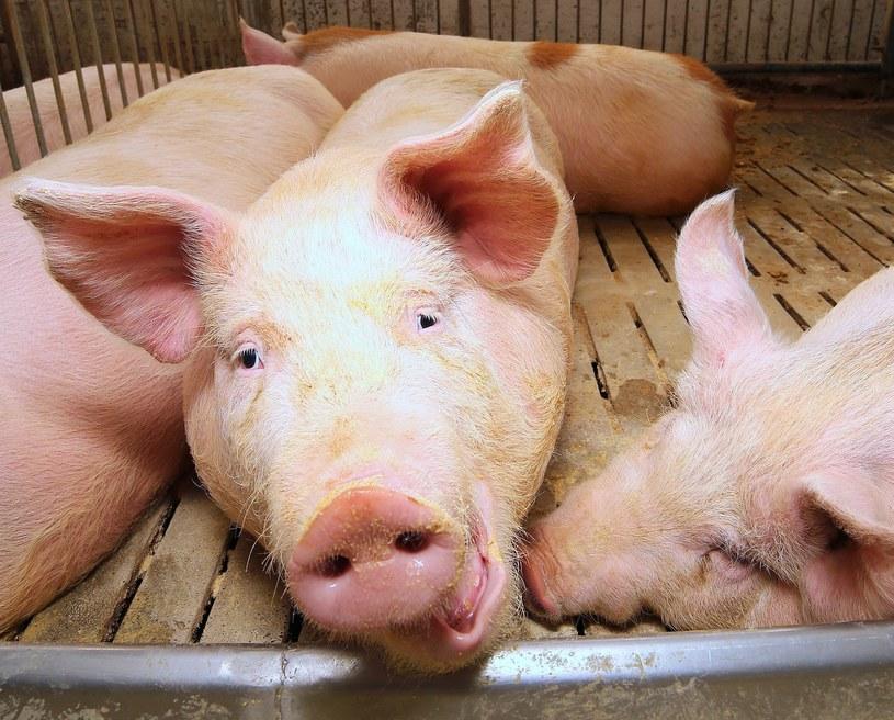 """Ziemniak bywa nazywany """"warzywem dla świń"""". Tymczasem jest bardzo zdrowy /123RF/PICSEL"""