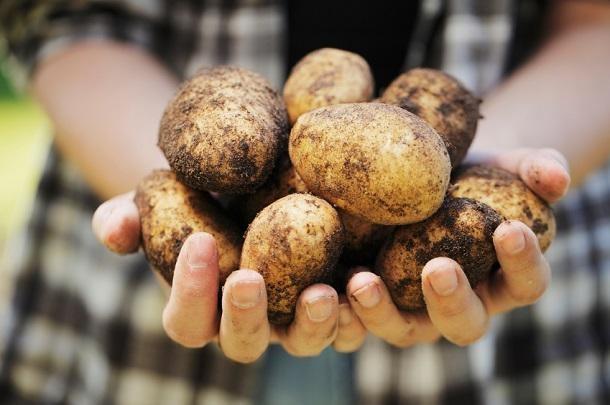 ziemniak na kaszaki /© Photogenica