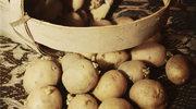 Ziemniaki a substancje toksyczne