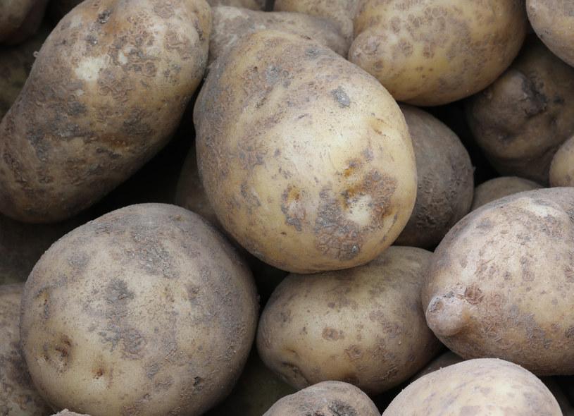 Ziemniaki można uprawiać też na balkonie /123RF/PICSEL