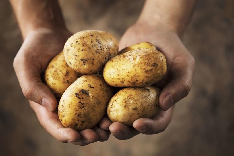 Ziemniaki po zakupie trzymaj w suchym miejscu. W przeciwnym razie szybko puszczą korzenie /123RF/PICSEL