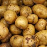 Ziemniaki w promocji są droższe o ponad 26 proc. Eksperci: Sieci reagują na czynniki rynkowe