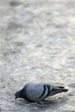 Zimą cierpią także zwierzęta /AFP