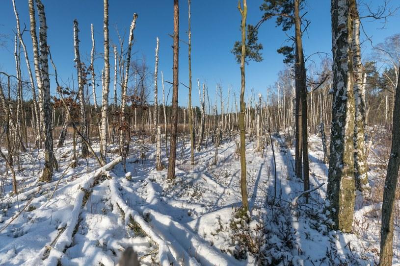 Zima na razie  nie odpuszcza / Arkadiusz Ziolek /East News