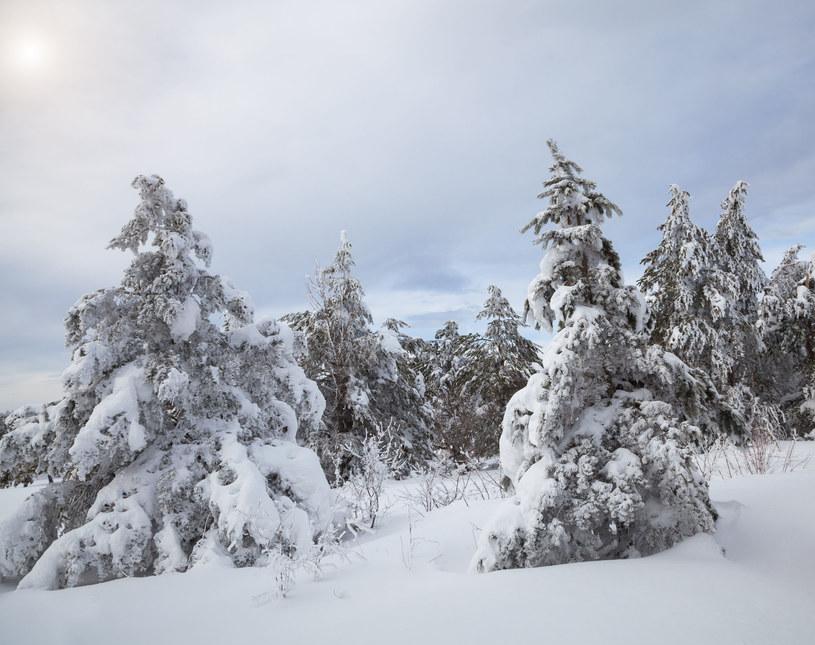 Zima nadejdzie już wkrótce i będzie mroźna /123RF/PICSEL