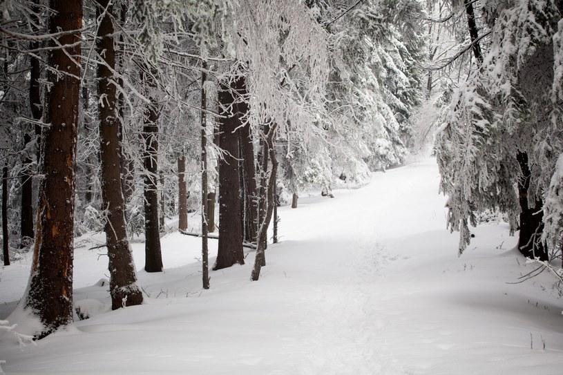 Zima w Beskidach; zdj. ilustracyjne /123RF/PICSEL