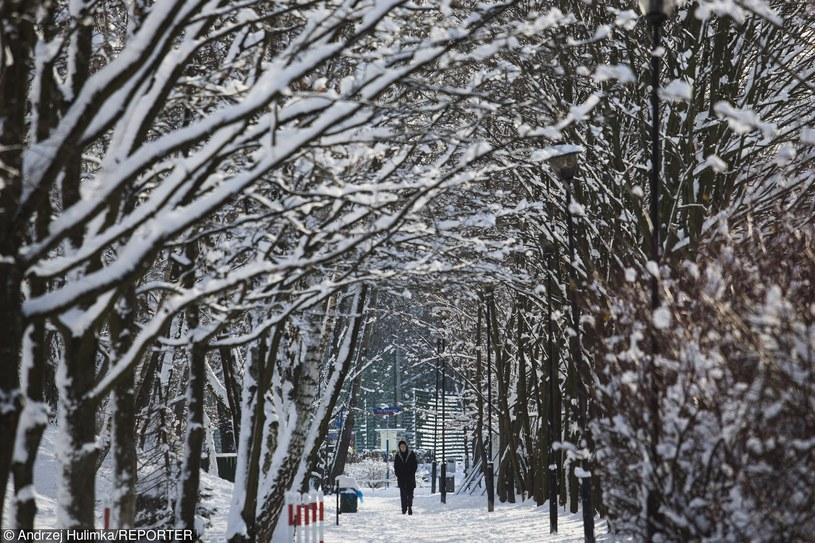 Zima w mieście, Warszawa /Andrzej Hulimka  /Reporter