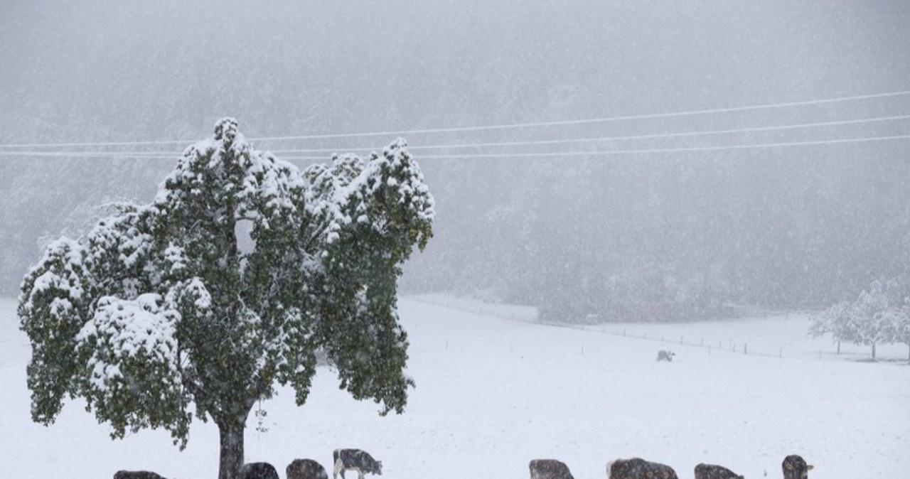 Zima zaskoczyła także mieszkańców Niemiec i Szwajcarii