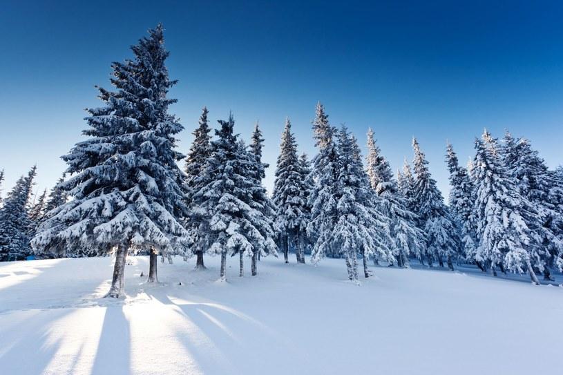 Zima zbliża się wielkimi krokami. Kiedy doczekamy się śniegu? /123RF/PICSEL