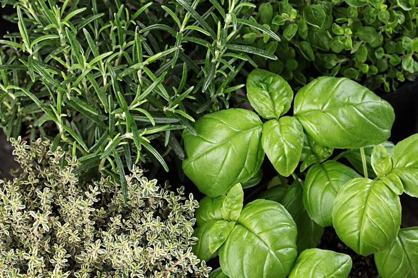 Zioła nadają warzywom doskonały aromat /123RF/PICSEL