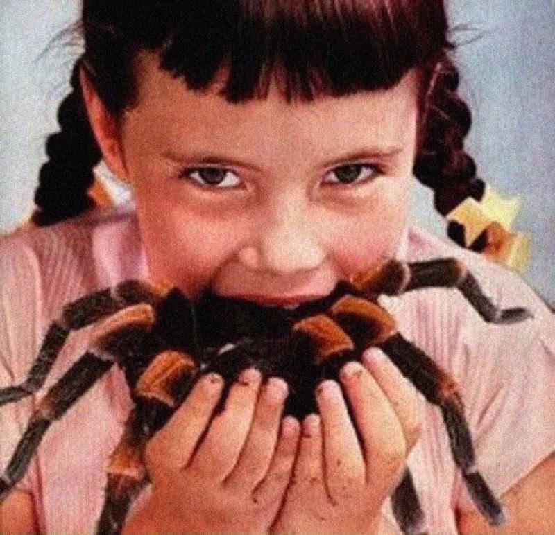 zjadanie pajaków /© Photogenica