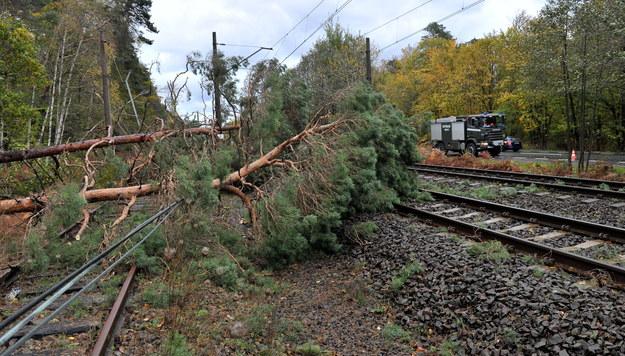 Złamane drzewa na torowisku po wichurze w Świnoujściu /Marcin Bielecki /PAP
