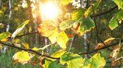 Złota jesień, a zima - łagodna