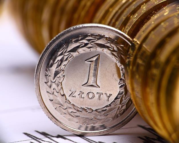Złoty umocnił się w stosunku do euro /©123RF/PICSEL