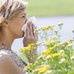 Zmiany klimatyczne zintensyfikują objawy alergii