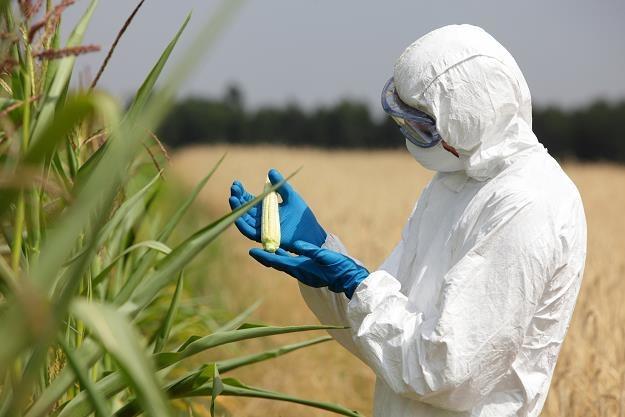 """Zmieniły się zasady znakowania żywności """"bez GMO"""" /©123RF/PICSEL"""