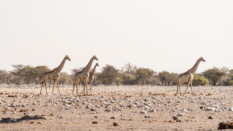 Znacznie więcej tu zwierząt niż turystów /123RF/PICSEL