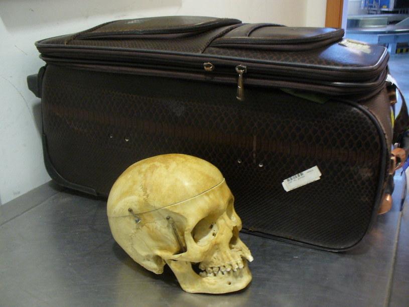 Znaleziona w walizce czaszka /Krajowa Administracja Skarbowa /materiały prasowe