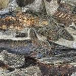 Znaleziono cmentarzysko pierwszych ofiar planetoidy, która zabiła dinozaury
