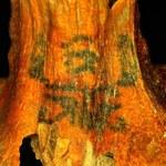 Znaleziono kolejne wytatuowane mumie egipskie