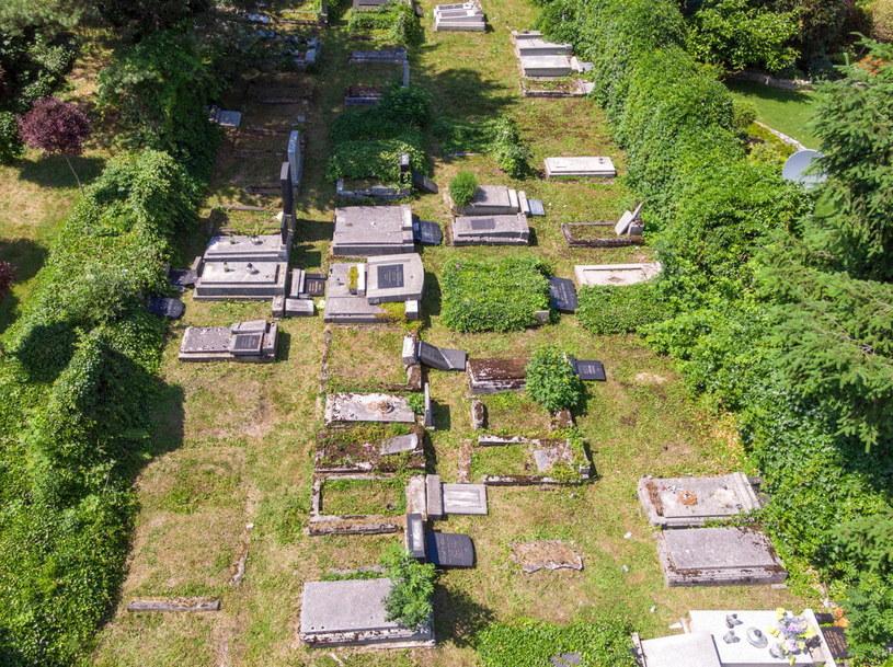 Zniszczony cmentarz w Bielsku-Białej /Andrzej Grygiel /PAP