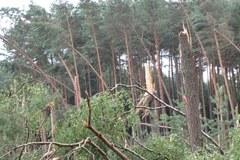 Zniszczony las po przejściu trąby powietrznej