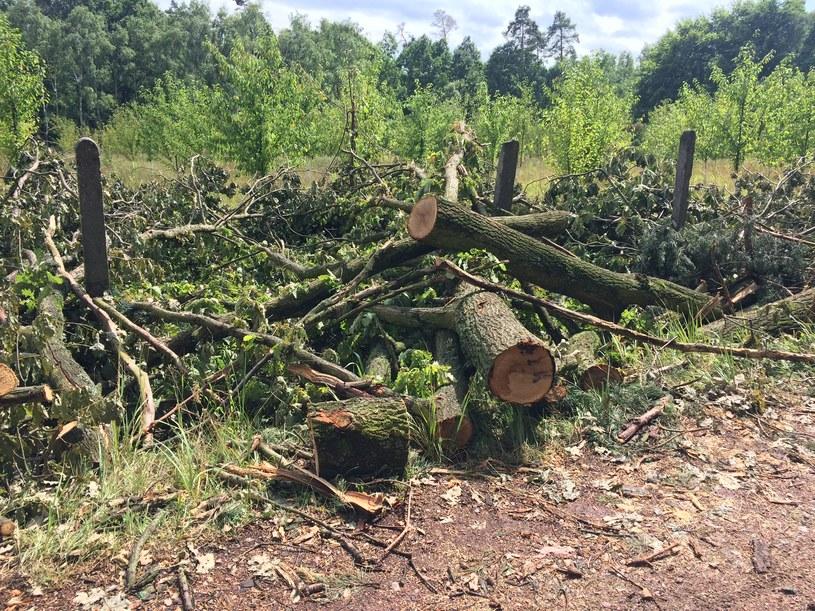 Zniszczony w wyniku wichury las na terenie gminy Nędza /Anna Kropaczek /RMF FM