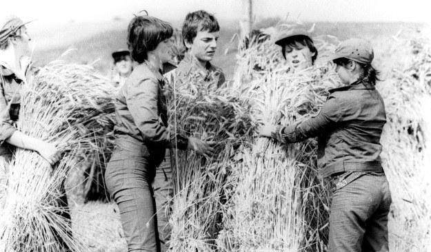 Żniwa 1980 r. - obóz OHP, fot. Michal Kulakowski /Agencja FORUM