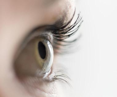 Zobaczyć świat cudzymi oczami. Przeszczep oka coraz bliżej