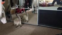 Zobaczył swoje odbicie w lustrze. I wtedy się zaczęło