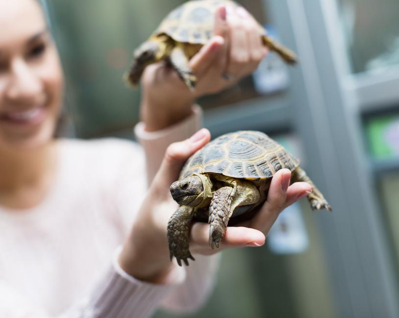 Żółwie, gekony i inne jaszczurki roznoszą salmonellę /123RF/PICSEL