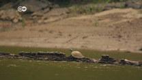 Żółwie rzeczne zagrożone wyginięciem?